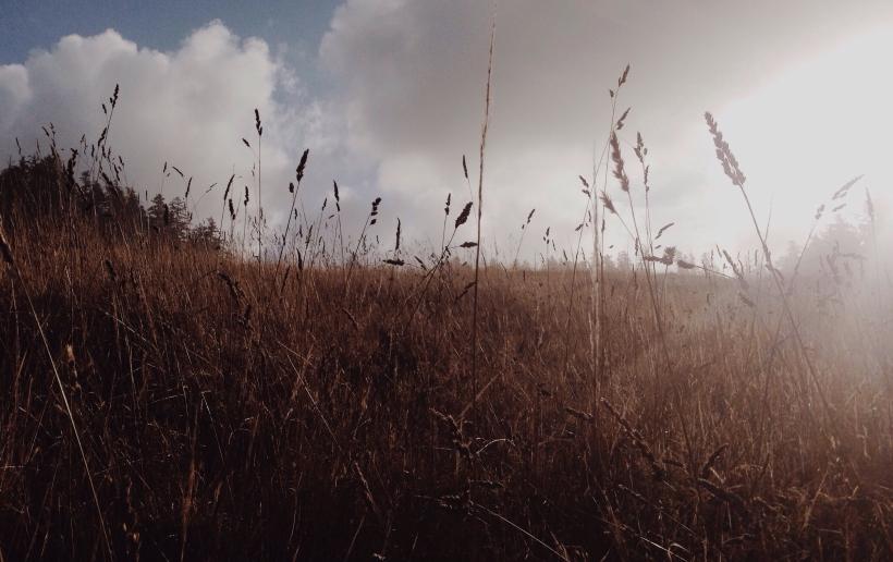 erin j bernard, ejb writing studio, grass, light, oregon coast, backlighting, terrible creative blog