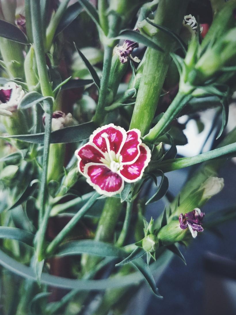 little flower, erin j bernard, ejbwritingstudio, terrible creative blog